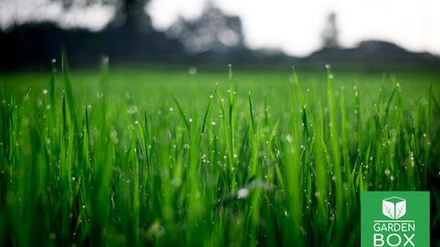 ❤️ Love your Lawn - Lawn Topdressing ❤️