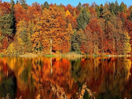 Fall Foliage Tracker in New Jersey