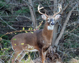 Morris County Parks - Deer Management