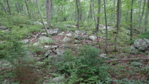 Over 96 acres have been added to Mahlon Dickerson Reservation, Morris County's largest park