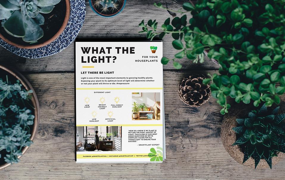 plant light guide, plant lighting, plant light, garden lights, plant sunlights, houseplants, plant care
