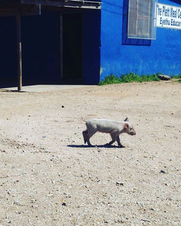 This little piggy went on the run!! Lol!