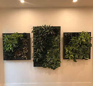 Miami Vertical Garden / Living Frames