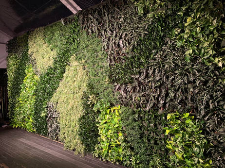 super bowl miami living walls.jpg