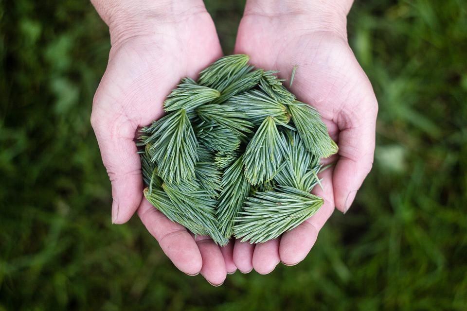 pino-silvestre-proprietà
