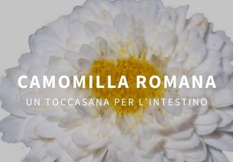 Camomilla romana: proprietà e benefici