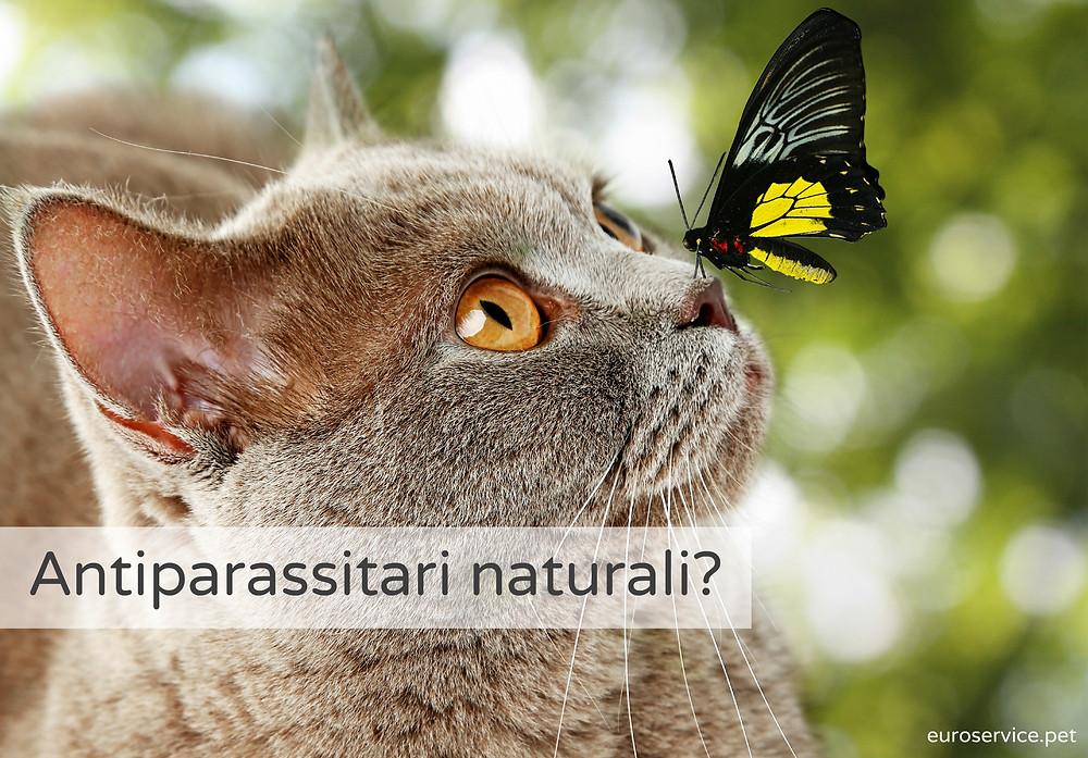 antiparassitario-naturale-gatto