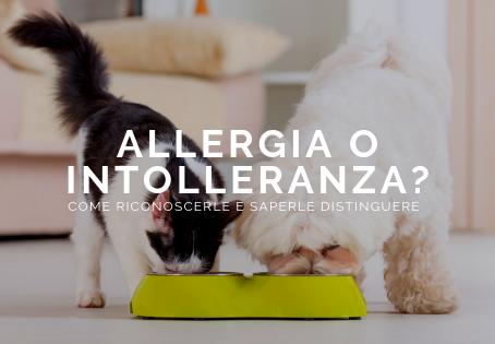 Allergia o intolleranza nel cane e nel gatto: come riconoscerle e distinguerle?