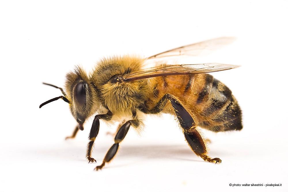api-pesticidi