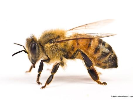 Antiparassitari chimici, killer delle api