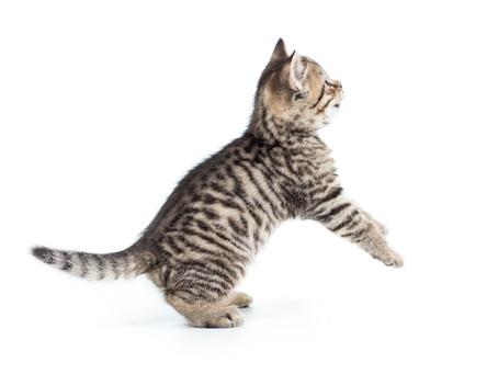 Taurina nel gatto, perchè è importante
