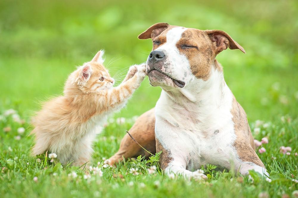 difese-immunitarie-cane-gatto