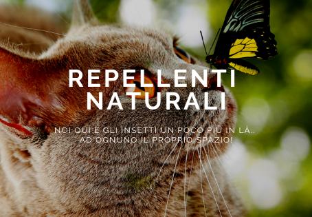 Sei alla ricerca di un repellente naturale per il tuo gatto?