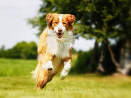 Rimedi naturali per dolori articolari di cane e gatto