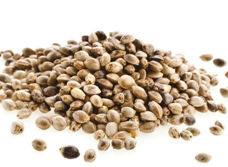 L'olio di semi di canapa ricco di proprietà antiossidanti