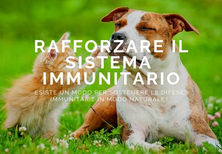 Il sistema immunitario dei nostri amici animali si rafforza anche dall'interno