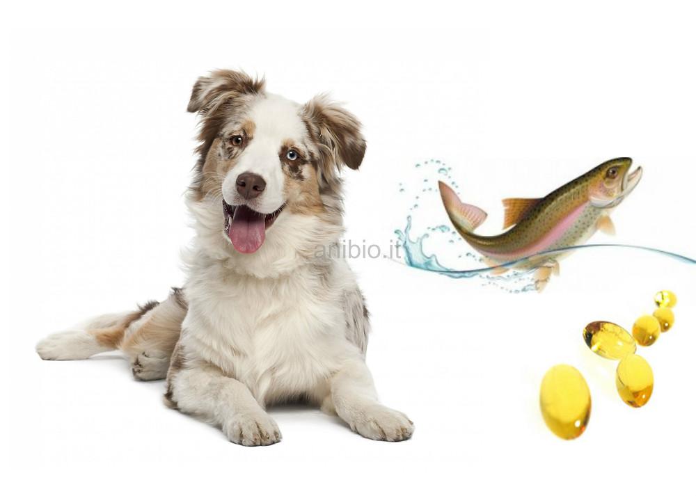olio-di-salmone-per-cani