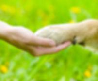 prodotti naturali e biologici per animali