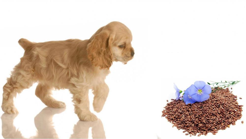 semi-di-lino-cane