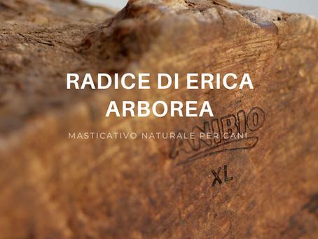 Radice di Erica Arborea, il masticativo naturale.