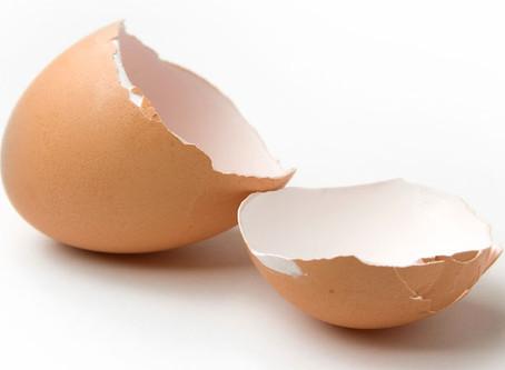Guscio d'uovo: quando usarlo per il cane ed il gatto?