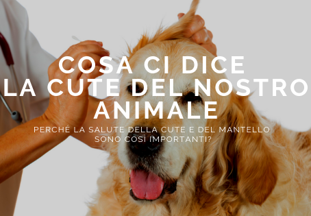 Cosa ci dice la cute del nostro animale?