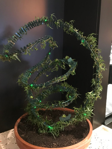 Our Topiary entry received an Honorable Mention