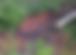 Screen Shot 2019-03-02 at 3.58.24 PM.png