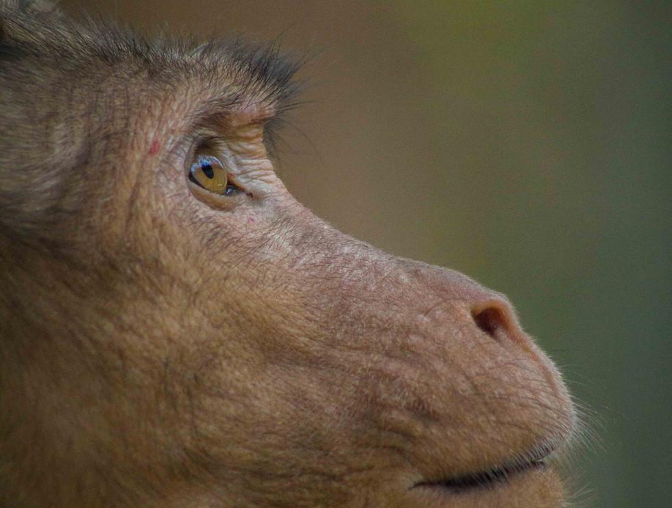 Retrato animal 01