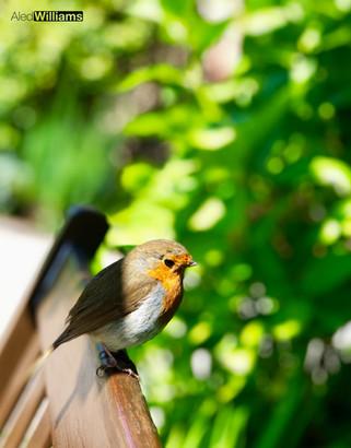 Robin (Lake District)