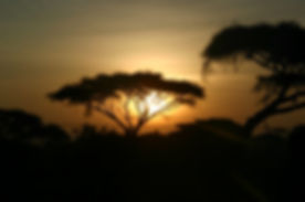 Amboseli Sunset.jpg