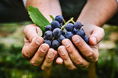 colher uva