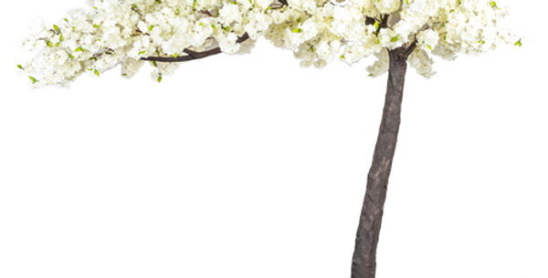 DELUXE HIRE 3.2 blossom tree/canopy