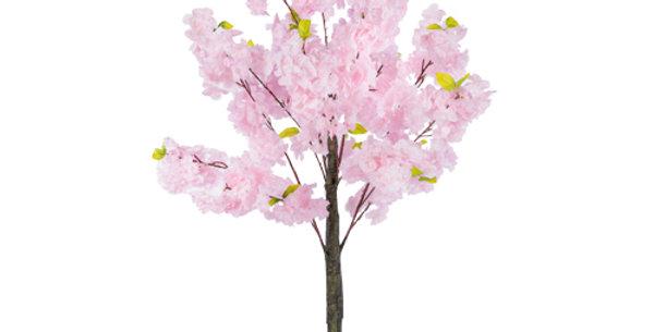 HIRE 1.5 blossom tree