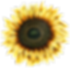 Sunflower_13.png