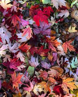 Fall looks good on us.
