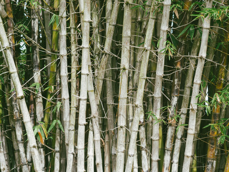 START GREEN MOVEMENT WITH BAMBOO PRODUCTS