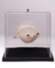 Puffer_edited.png