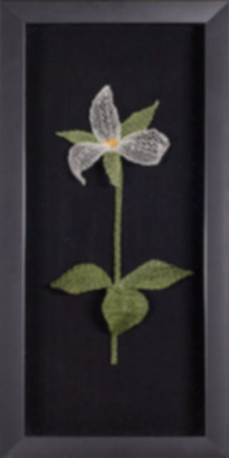 Essence of Trillium.jpg
