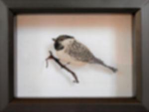 Essence of Chickadee