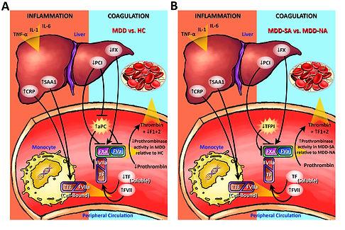 Liver Blood Vessel Combined.jpg