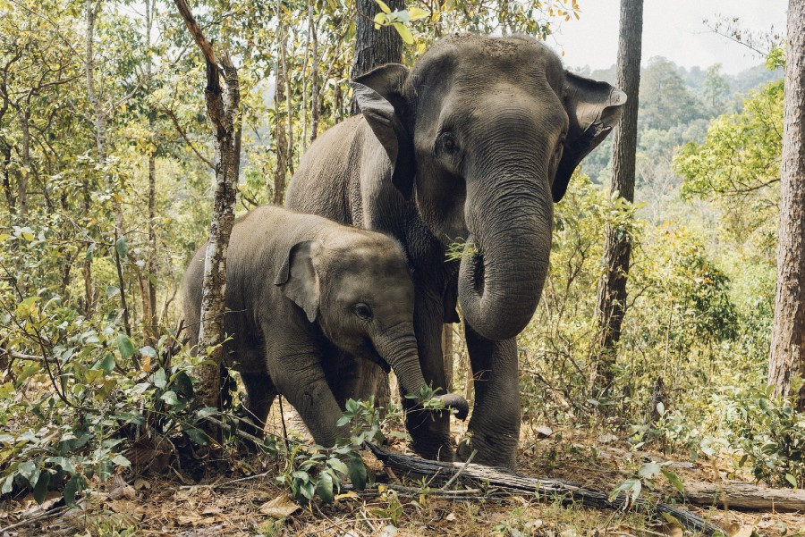 Mother and baby elephant walking through trees