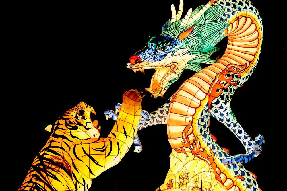 Tiger Battling a Dragon: lighted flexible sculptures
