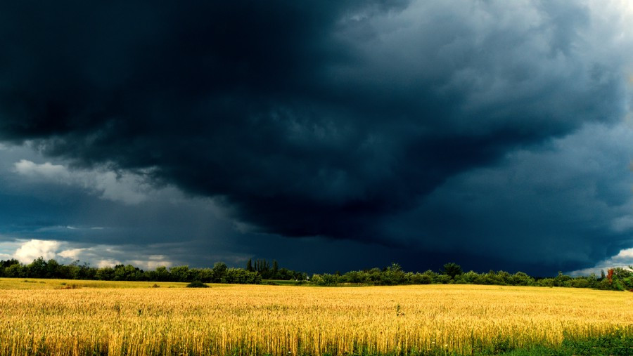 Black funnel cloud forming above yellow field