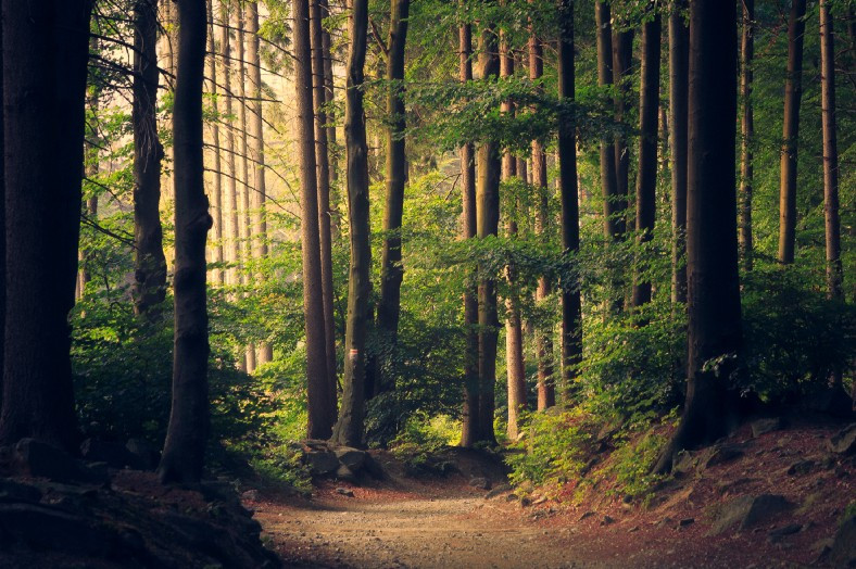 Green woods that Thoreau loved