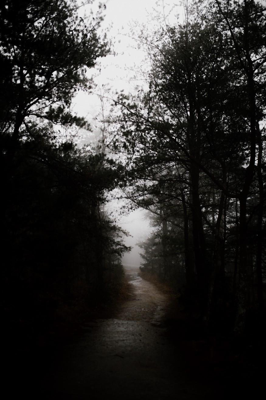 dark, woodland path