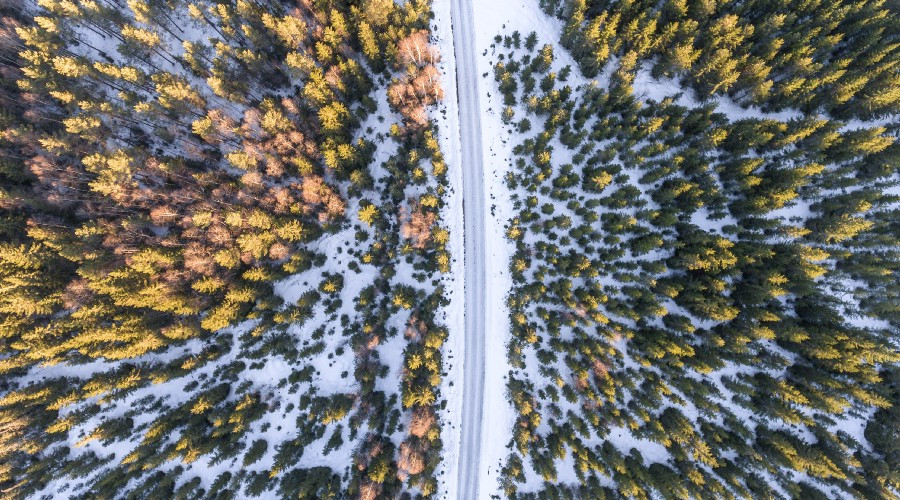 Aerial photo of road dividing a forest