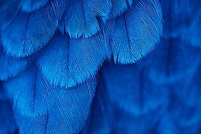 plumage background of bird close up.jpg