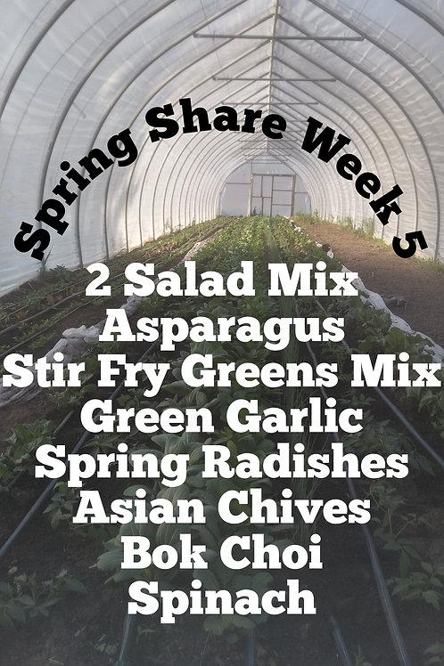 Spring Share Week 5