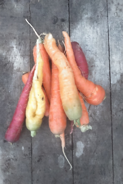 Rainbow carrots - bulk 1 pound